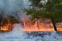Түймрийн улмаас байгаль, экологид 10,7 тэрбумын хохирол учирчээ
