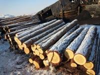 Хууль бус мод бэлтгэлтэй холбоотой 288 зөрчил илэрчээ
