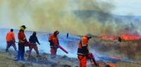 20 гаруй мянган га талбай түймэрт өртжээ