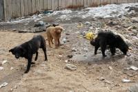 Нохойд хазуулбал галзуугийн эсрэг вакцин заавал хийлгэхийг зөвлөж байна