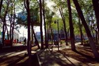 Б.Чимид: Том мод шилжүүлэн суулгаж хотоо чимдэг нь дэлхийн жишиг