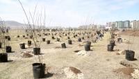 Үндэсний цэцэрлэгт хүрээлэнд 2000 ширхэг мод тарилаа