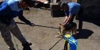 Гэр хорооллын айл өрхийн нохойг бүртгэлжүүлж байна