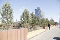 Д.Батсайхан: Хотын гудамжинд шилжүүлэн суулгаж буй том модод 500-600 жилийн настай