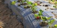 Өмнөговьчууд наадмаар шинэ ургацын гүзээлзгэнээ хураана