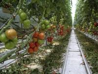 Өргөст хэмх, улаан лоольны импортод цэг тавъя
