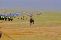 Монгол адууны стандартыг зөв тогтооё
