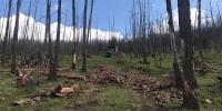 """""""Ойн цэвэрлэгээ хийснээр хулгайн мод, түймэр, хортон шавьж багасна"""""""