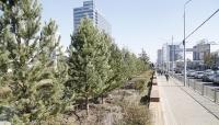 Бүх нийтээр мод тарих өдөр