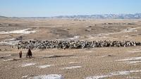 Монголын төр малынхаа эрүүл мэндийг хяналтандаа авах хуулийг баталлаа