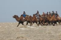 Тэмээний уралдаан зохион байгуулахыг хориглолоо