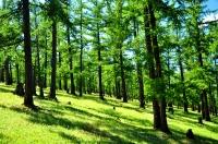 Монгол орны ойн талбай 1950 оныхоос хоёр дахин багасчээ