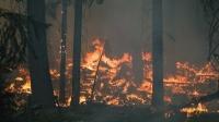 Хөвсгөлд ойн түймэр гарчээ