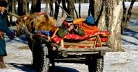 Монголд ирэх жуулчдын тоо өсчээ