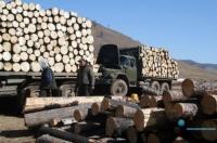 Зөвшөөрөлгүй мод бэлтгэж, тээвэрлэсэн, худалдсан бол 450-5.400.000 хүртэл торгоно