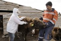 Шүлхийгээс урьдчилан сэргийлэх вакцинжуулалт улсын хэмжээнд 80 хувьтай байна