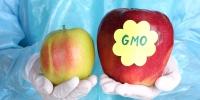 Генийн өөрчлөлттэй хүнсний бүтээгдэхүүний аюул