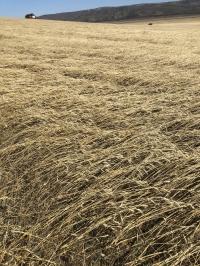 Ургац хураалт хойшилж болзошгүй