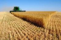 Улсын хэмжээнд ургац хураалт 54 хувьтай байна