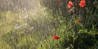 Үргэлжилсэн бороотой байх тул үер усны аюулаас сэрэмжтэй байхыг анхааруулж байна