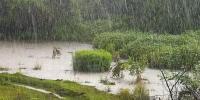 Төвийн аймгуудын нутгийн зарим газраар  дуу цахилгаантай, аадар бороо орно
