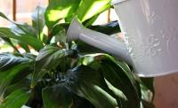 Агаар цэвэршүүлэгч тасалгааны ургамал тарья