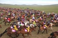 Эрлийз, монгол морио энэ жил ч ялгаж чадсангүй
