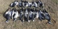 Мэрэгч устгалын хорноос болж 30 гаруй шувуу үхсэн байна