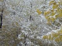 Өнөөдөр зүүн аймгуудын нутгийн хойд хэсгээр цас орж, цасан шуурга шуурна