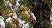 Өнөөдөр Хангай, Хөвсгөлийн уулархаг нутгаар нойтон цас орно
